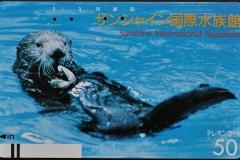 Japan Sea otter eats clam 564