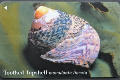 Jersey Monodonta lineata 105