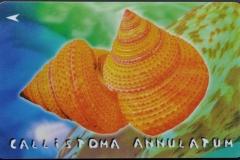 Singapore Calliostoma annulatum 111