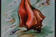 Bivalve Gastropode Busyconidae-001