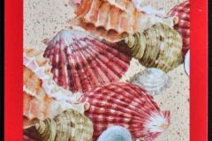 Muricidae Pectinidae