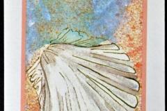 Pectinidae-002