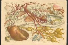 Buccinum, Aporhais, bivalve etc. 231-1
