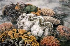 Tridacna gigas 1746-1