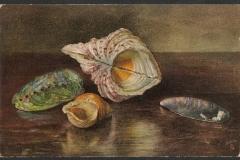 Tuck Postcard, Hippopus, Haliotis, Wulk, Mussel, 1529-1