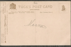 Tuck Postcard, Trochus niloticus Cypraea tigris etc.1616-2