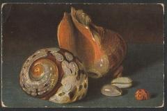Turbo sarmaticus, Cypraea etc. 101-1. 101-1