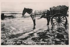 Schelpenvisser 1600-1