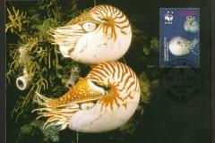 Palau 2006 Nautilus belauensis 1362