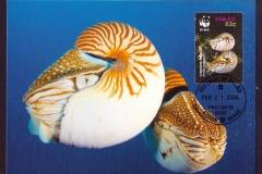 Palau 2006 Nautilus belauensis 1364