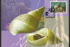 Thailand 1997 Littorina melanostoma 707
