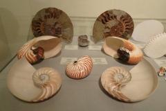 Exhibition Museum De Roos-004