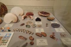 Exhibition Museum De Roos-005