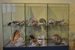 Exhibition Museum De Roos-012