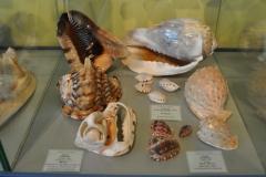 Exhibition Museum De Roos-017