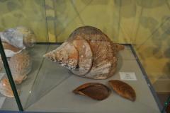 Exhibition Museum De Roos-019-1