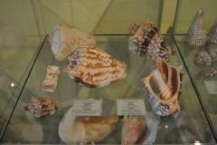 Exhibition Museum De Roos-019