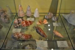 Exhibition Museum De Roos-021