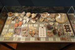 Exhibition Museum De Roos-035