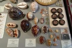 Exhibition Museum De Roos-039