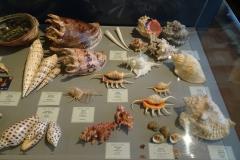 Exhibition Museum De Roos-047