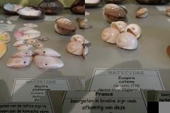 Exhibition Museum De Roos-078