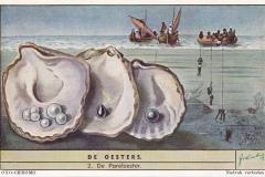 Oesters2-OXO-CHROMO
