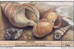 Schelpen1-OXO-CHROMO