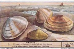 Schelpen5-OXO-CHROMO
