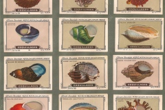 Nestle-Chocolats-Coquillages-Peter-Cailler-Kohler-Serie-69-1-12