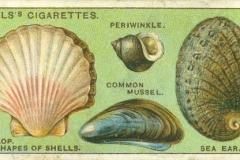 Serie 2de 50 Why Shells vary in shape-1
